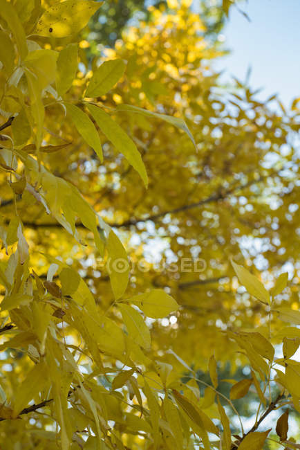 Branches with autumn leaves against the sky — Stock Photo
