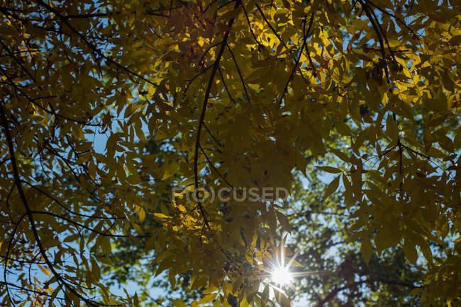 Lumière du soleil en passant par le vert des arbres — Photo de stock