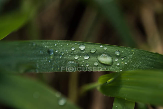 Close-up of dew drops on the green leaves — Stock Photo