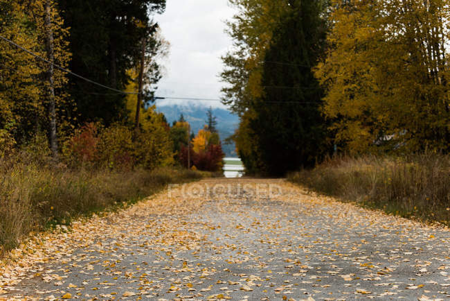 Road passing through beautiful autumn trees — Stock Photo