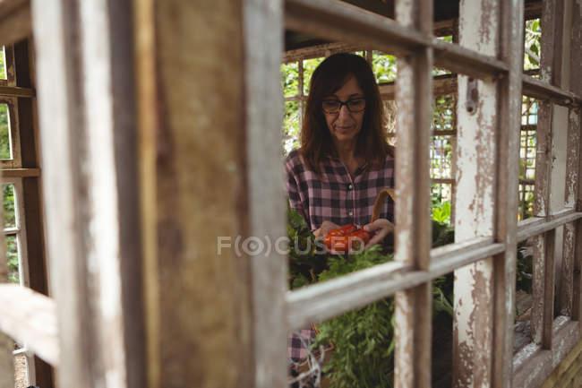 Femme exploitant des légumes frais dans le jardin — Photo de stock