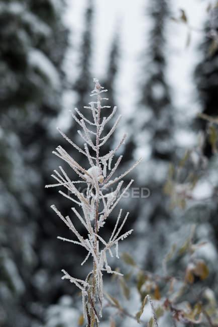 Closeup vista da flora, coberto de neve durante o inverno — Fotografia de Stock