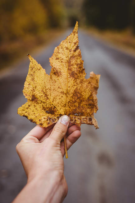 Close-up of hand holding an autumn maple leaf — Stock Photo