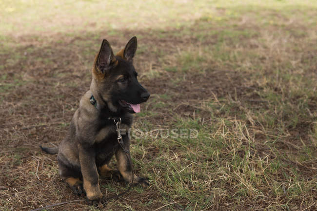 Close-up of watchful shepherd dog sitting in the farm — Stock Photo