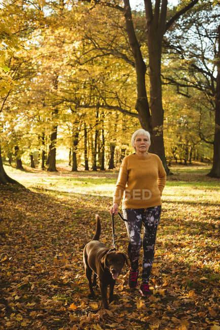 Femme âgée marchant dans le parc avec son chien de compagnie par une journée ensoleillée — Photo de stock