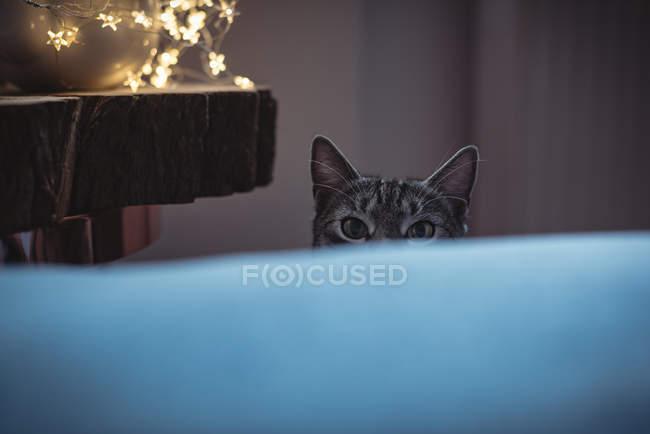 Любопытный домашний кот подглядывает за диваном — стоковое фото