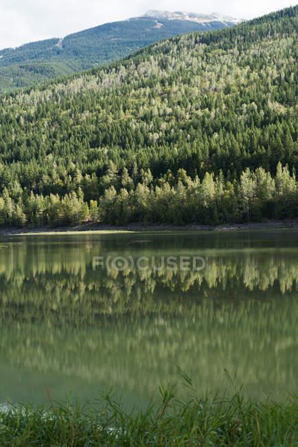 Pendenza montana coperta di verde bosco vicino al fiume — Foto stock
