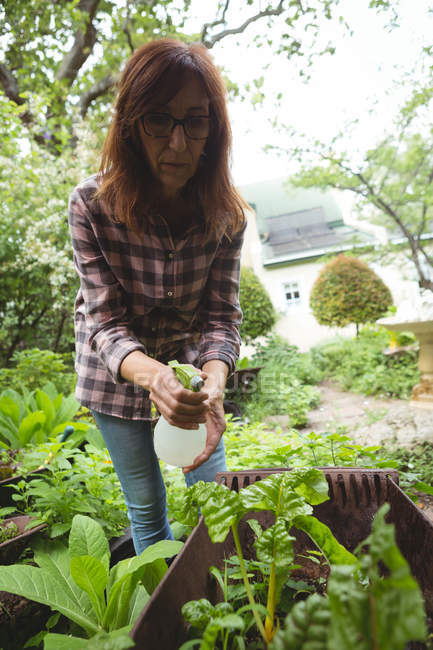 Woman spraying water on plants in garden — Stock Photo