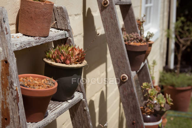 Pot plants on wooden ladder in garden — Stock Photo
