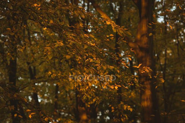 Жовтувато помаранчевий Осіннє листя на гілці дерева денний час — стокове фото