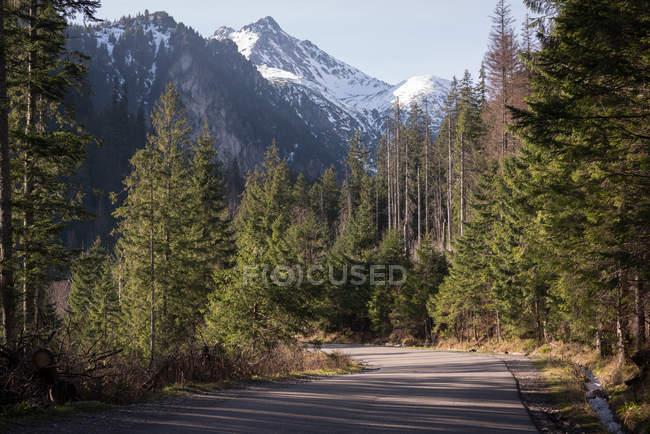 Route traversant des montagnes enneigées et des arbres par une journée ensoleillée — Photo de stock