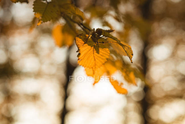 Close-up of leaves in a branch of tree during daytime — Stock Photo