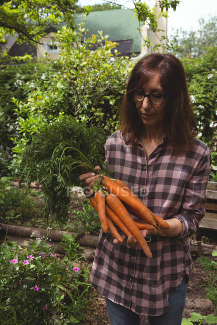 Woman holding fresh carrots in garden — Stock Photo