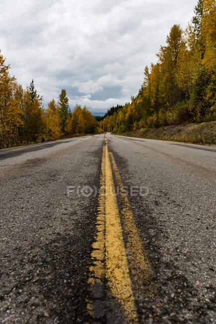 Прямі сільська дорога проходить через осінній ліс — стокове фото