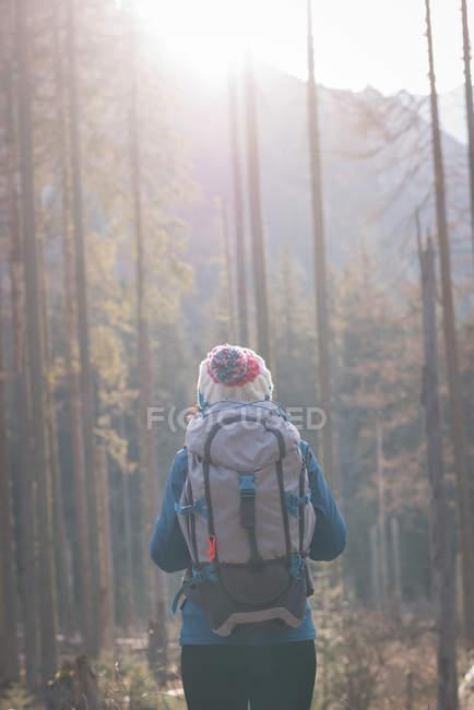 Vista trasera del excursionista femenino de pie con mochila en el bosque - foto de stock