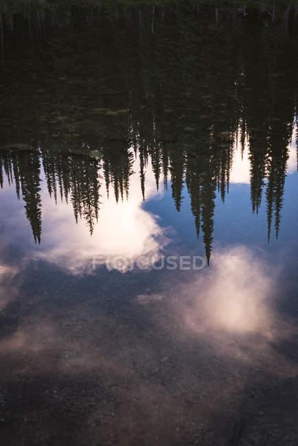 Riflessione di alberi densi di conifere in un corpo idrico stabile — Foto stock