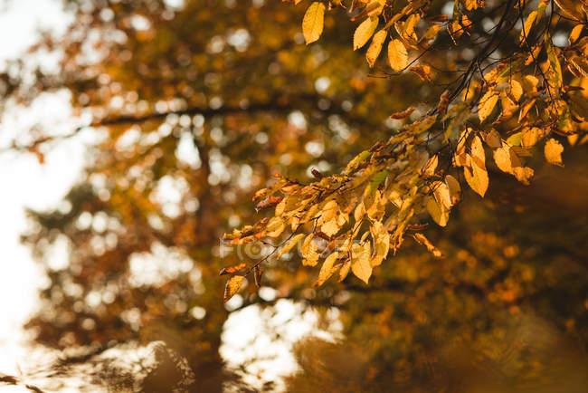 Gelblich Herbstlaub orange auf Ast des Baumes tagsüber — Stockfoto