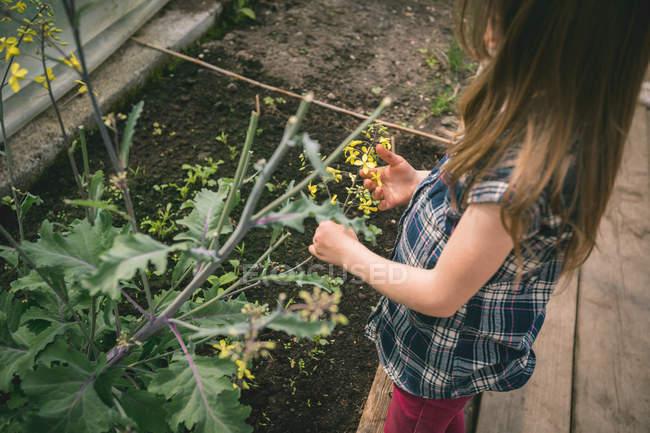 Висока кут зору дівчинка тримає квітка-о-пліч в парникових — стокове фото