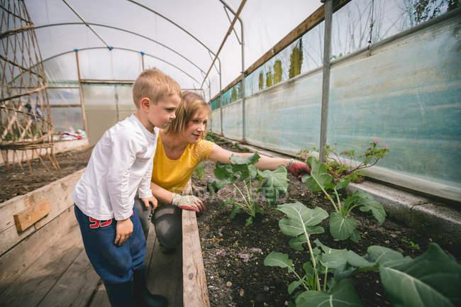 Mutter und Sohn gärtnern gemeinsam im Gewächshaus — Stockfoto