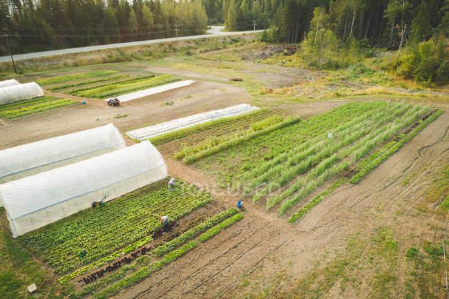 Ariel di piante coltivate in serra coperta di plastica su un campo — Foto stock