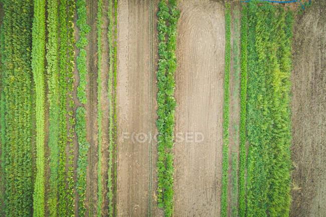 Plantation de cultures mixtes cultivée dans une ferme sur une journée ensoleillée — Photo de stock
