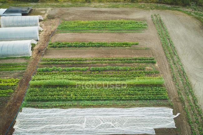 Plantation de cultures mixtes cultivée dans la ferme par une journée ensoleillée — Photo de stock