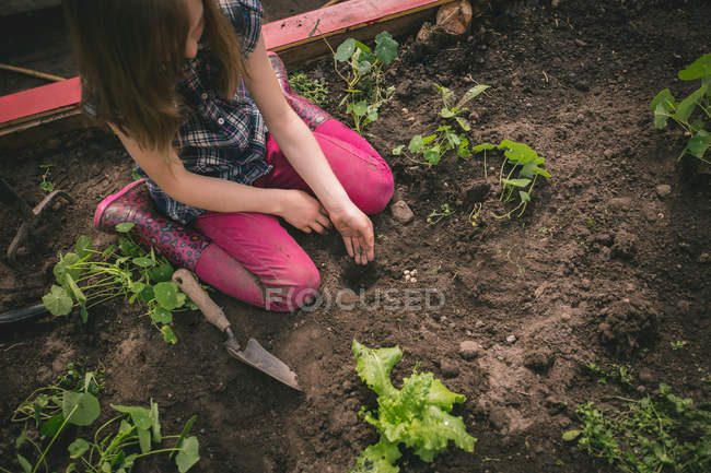 Young girl planting seed in greenhouse — Stock Photo