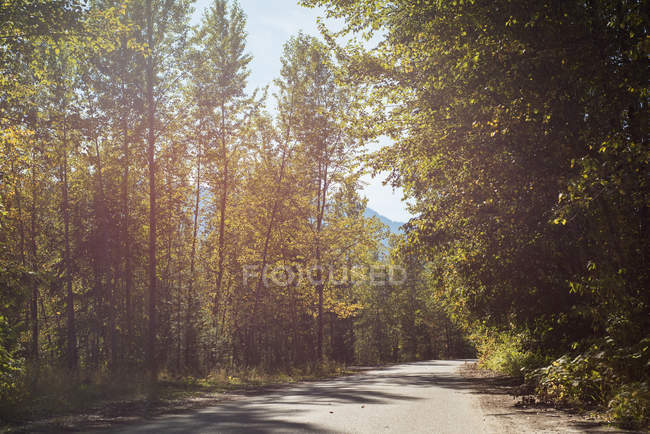 Road passing through forest on a sunny day — Stock Photo