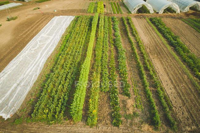Aerea di piantagione nella fattoria in una giornata di sole — Foto stock