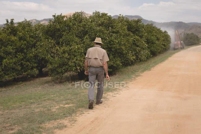 Вид сзади на фермера, идущего по оранжевой ферме — стоковое фото