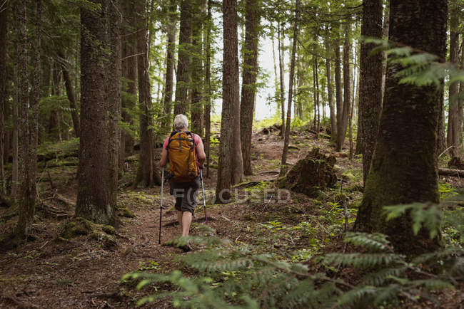 Visão traseira da mulher madura com postes de caminhada andando na floresta — Fotografia de Stock