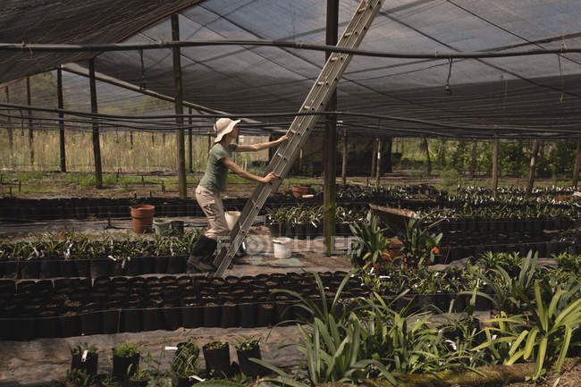 Farmer climbing up the ladder in the greenhouse — Stock Photo