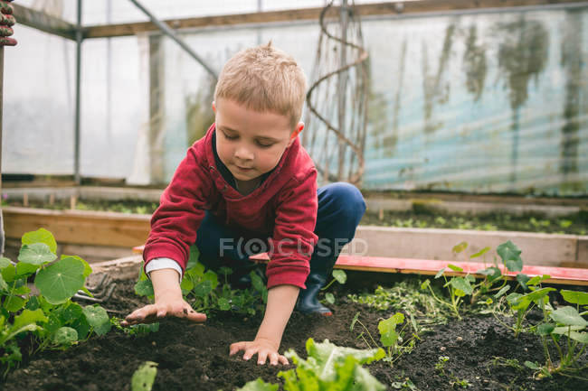 Kid patting soil on top in greenhouse — Stock Photo