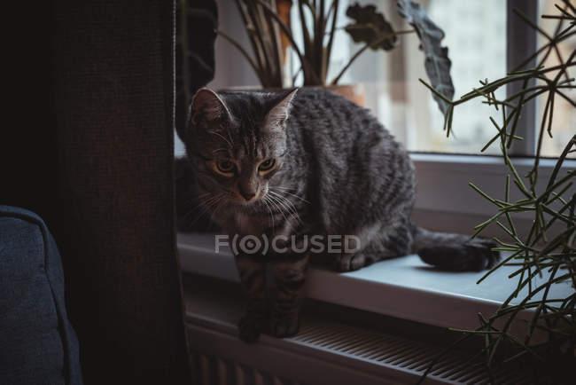 Крупный план кота, сидящего на подоконнике — стоковое фото