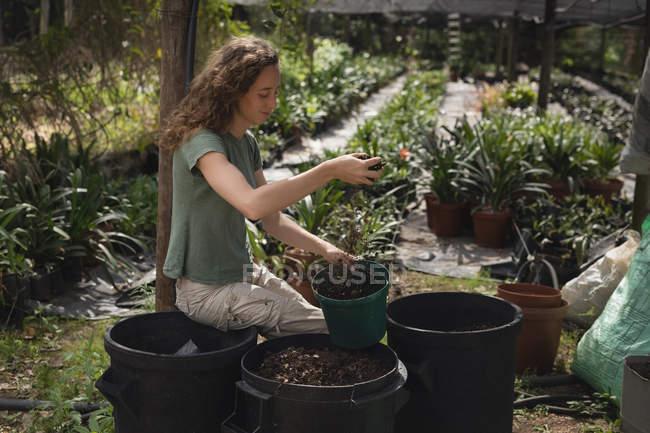 Farmer putting fertilizer soil into pot in greenhouse — Stock Photo