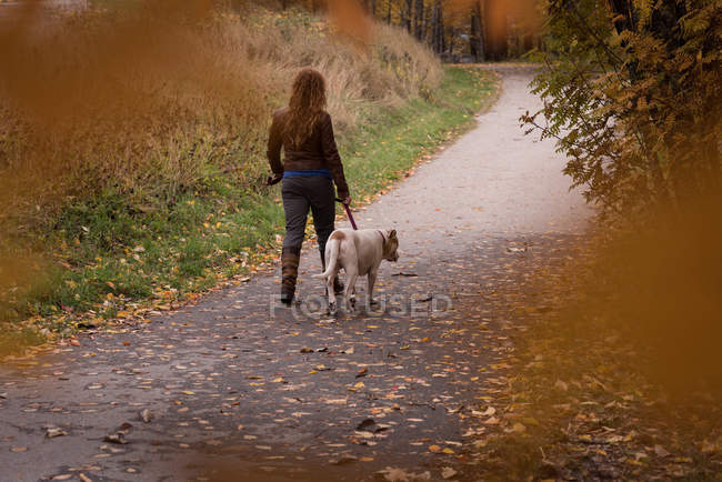 Vue arrière de la femme marchant dans le parc avec son chien de compagnie pendant l'automne — Photo de stock