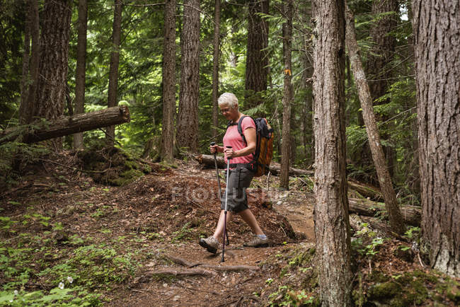 Mature woman with hiking poles walking in the forest — Stock Photo
