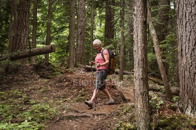 Mulher madura com caminhadas polos andando na floresta — Fotografia de Stock