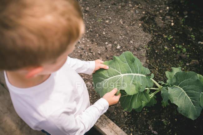 Хлопчик проведення відпустки заводу в руці, в парникових — стокове фото