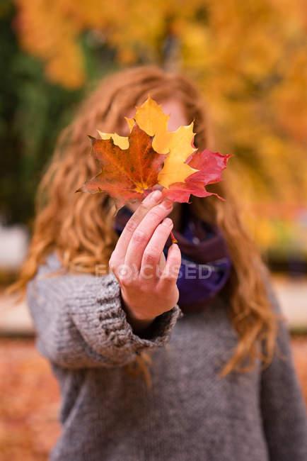 Женщина, показаны красные, желтые и коричневые клен листья в Осенний парк — стоковое фото