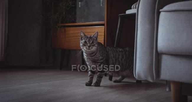 Любопытный домашний кот стоит рядом с диваном дома — стоковое фото
