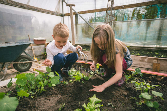 Kids gardening together in greenhouse — Stock Photo