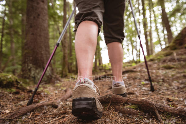 Low section of mature woman with hiking poles walking in the forest — Stock Photo