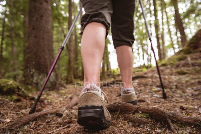 Seção de baixo de mulher madura com caminhadas polos andando na floresta — Fotografia de Stock