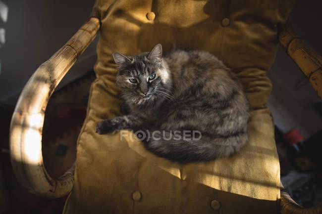 Повышенный вид на кошку, сидящую на деревянном стуле дома — стоковое фото