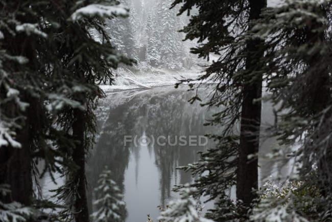 Rio com neve coberta de árvores em lados durante o inverno — Fotografia de Stock