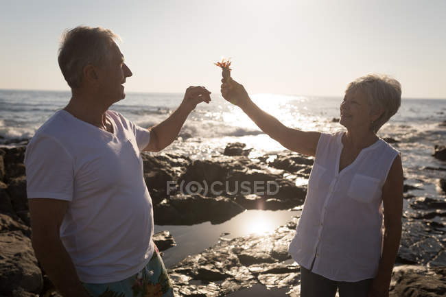 Senior couple playing with bird near sea on a sunny day — Stock Photo