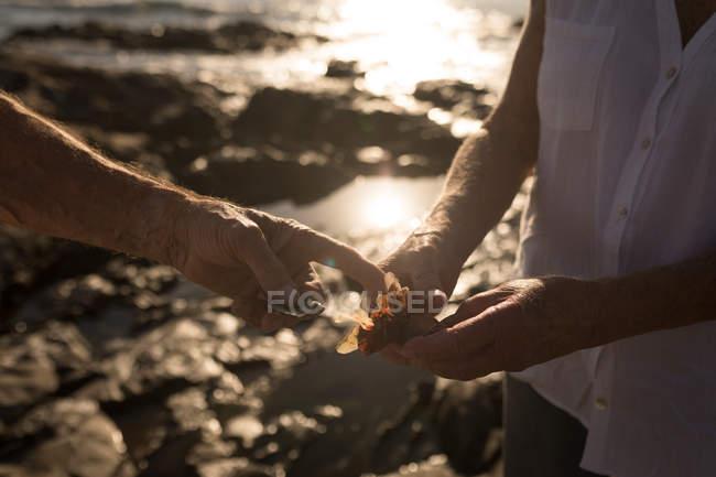 Primo piano della coppia anziana che tiene un uccello vicino al mare — Foto stock