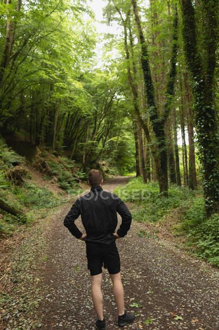 Vista posteriore dell'uomo in piedi nella foresta — Foto stock