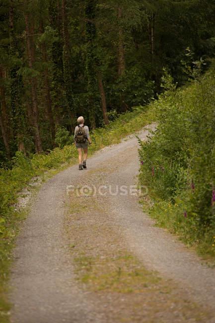 Vue arrière de la femme avec sac à dos marchant dans la forêt — Photo de stock